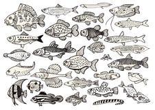 Uma coleção grande dos peixes Foto de Stock