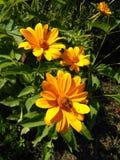 Uma coleção vívida do mel nas flores do ouro foto de stock royalty free