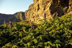 Uma colheita da natureza Imagem de Stock