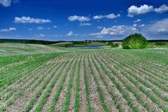 A uma colheita do homem é a fotografia de um outro homem Fotos de Stock