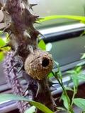 Uma colmeia vazia da abelha fotografia de stock royalty free