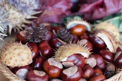 Uma composição das castanhas e o cone e as folhas fotografia de stock