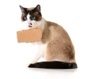Uma comunicação do gato Imagens de Stock Royalty Free