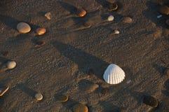 Uma concha do mar e alguns seixos fotografia de stock royalty free