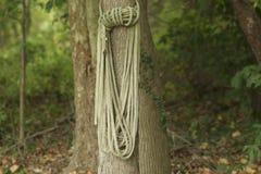 Uma corda & uma árvore atadas fotografia de stock