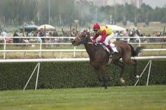 Uma corrida de cavalos. Fotos de Stock