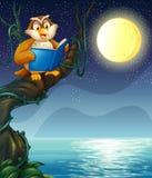 Uma coruja que lê um livro acima de um ramo de uma árvore ilustração stock
