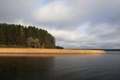 Uma costa coberto de vegetação do lago fotos de stock