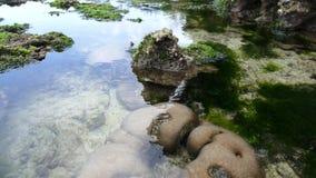 Uma costa coral calma em uma maré baixa em África vídeos de arquivo