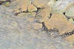 Uma costa delicada Fotografia de Stock Royalty Free