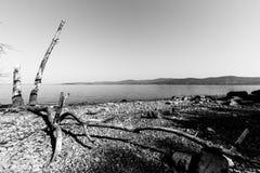Uma costa do lago em um dia brilhante do verão, com alguns troncos e uns comp(s) Fotos de Stock
