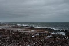 Uma costa em Islândia Fotos de Stock