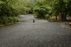 Uma criança acima crescida, deixou-os escolhe sua própria maneira Foto de Stock Royalty Free