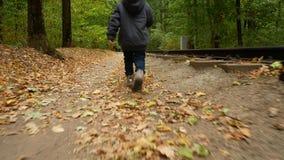 Uma criança anda com a opinião traseira da floresta do outono, a menina está andando ao longo das folhas de outono vídeos de arquivo