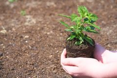 Uma crian?a com a planta verde pequena imagem de stock royalty free