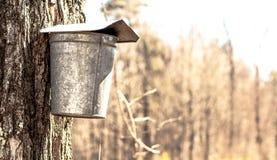 Uma cubeta da seiva em New Hampshire Imagens de Stock