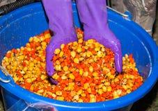 Uma cubeta do milho colorido fervido Fotos de Stock Royalty Free