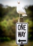 Uma decisão da gaivota de mar da maneira Fotografia de Stock