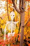 Uma decoração de esqueleto de Dia das Bruxas que pendura em uma árvore com as folhas coloridas no fundo fotografia de stock royalty free