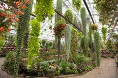 Uma disposição de plantas de florescência potted de suspensão. Fotos de Stock
