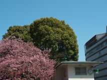 Uma entrada do parque de Ueno, Tóquio, Japão imagem de stock royalty free