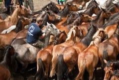 Uma equitação do cavaleiro Imagem de Stock Royalty Free