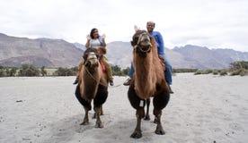 Uma equitação feliz dos pares do turista no dobro humped camelos bactrianos imagem de stock royalty free