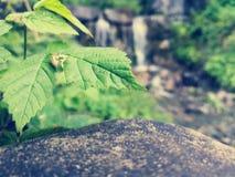 Uma erva daninha agradável Imagem de Stock