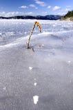 Uma erva daninha em um lago congelado. fotos de stock royalty free