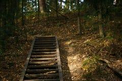 Uma escadaria de madeira na floresta do outono da reserva do pagamento de Chertovo na região de Kaluga imagem de stock royalty free