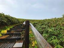 Uma escadaria no campo verde com céu nebuloso Imagens de Stock Royalty Free