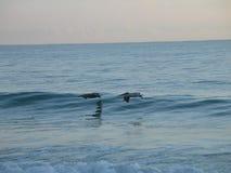 Uma escova com o mar Foto de Stock Royalty Free
