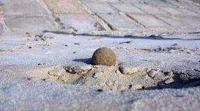 Uma esfera da alga Foto de Stock Royalty Free