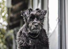 Uma espera do cão foto de stock royalty free