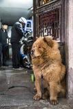 Uma espera do cão na rua em hanoi fotografia de stock royalty free