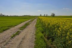 Uma estrada à terra do país pelos campos do canola foto de stock royalty free