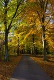 Uma estrada através das madeiras na queda Imagem de Stock Royalty Free
