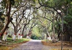 Uma estrada através de uma floresta bonita fotografia de stock