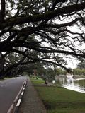 Uma estrada cênico com a fileira dos raintrees perto de um lago fotos de stock