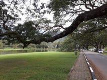 Uma estrada cênico com a fileira dos raintrees perto de um lago fotografia de stock