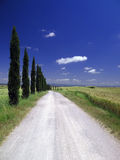 Estrada 08 de Tuscan Fotos de Stock Royalty Free