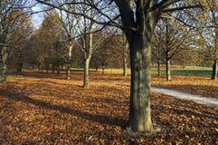 Uma estrada da aleia no parque outonal Imagens de Stock Royalty Free