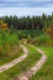 Uma estrada de floresta do enrolamento nas madeiras Imagens de Stock Royalty Free