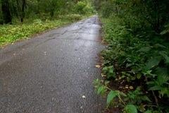 Uma estrada de floresta velha Imagens de Stock