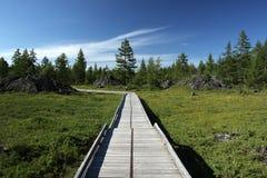 Uma estrada de madeira Imagens de Stock Royalty Free