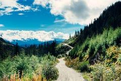Uma estrada de registro que enrola através de um vale da floresta fotos de stock royalty free