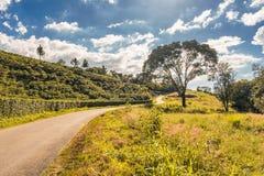 Uma estrada e uma árvore imagens de stock