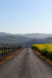 Uma estrada em Sonoma CA Imagens de Stock Royalty Free