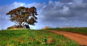 Uma estrada em um campo Foto de Stock Royalty Free
