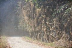 Uma estrada empoeirada com teias de aranha ao redor Fotos de Stock Royalty Free